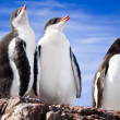 Penguins resting — Stock Photo