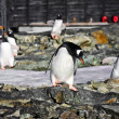 Penguins in Antarctica — Foto de stock #4920042