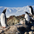 Three penguins dreaming — Stock Photo #4920046