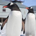tučňáků v Antarktidě — Stock fotografie