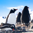 Penguins in Antarctica — Stock fotografie #4920050