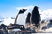 Penguins in Antarctica — Stock Photo