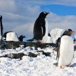 Penguins on a rock — Stock Photo #4993318