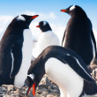 Penguins in Antarctica — Foto de stock #4993348