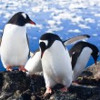 Penguins in Antarctica — Foto de stock #4993353