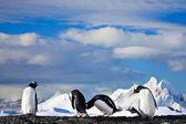 Penguins dreaming — Stock Photo