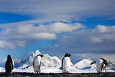 Pingüinos soñando — Foto de Stock