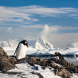 Foto Stock: Two penguins dreaming
