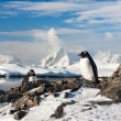 Two penguins dreaming — Stock Photo #5275616