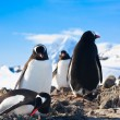 Foto Stock: Penguins in Antarctica