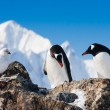 Penguins in Antarctica — Stock Photo #5275632