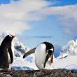 Two penguins dreaming — Stock Photo