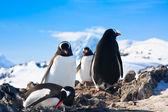 Penguins in Antarctica — Stock Photo