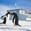 Penguins in Antarctica — Stock Photo #5309288