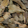 leaf litter — Stock Photo