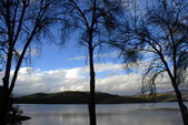 Trees lake — Stock Photo