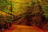 Path — Stockfoto