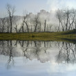 Trees in the fog with lake reflection — Stock Photo