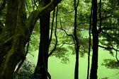 Yeşil Göl — Stok fotoğraf