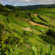 Green azores — Stock Photo #4894689