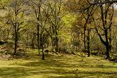 Floresta — Fotografia Stock