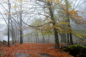 Forest fog — Photo