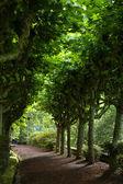 Path azores — Stock Photo