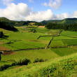Stock Photo: Green azores