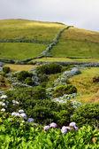 Land azores — Stock Photo