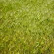 Goat grass meadow — Stock Photo