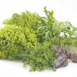 Fresh raw herbs — Stock Photo
