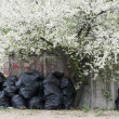 Blooming tree and sweepings sacks — Stock Photo #4785006