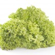 Green lettuce on white — Stock Photo