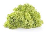Green lettuce on white — Stock Photo