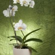 Beautiful white orchid — Stock Photo #5139703