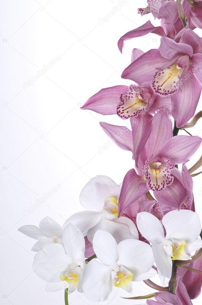 Hermosas orquídeas blancas y rosadas, aisladas sobre fondo blanco\u2014 Foto de margaryta