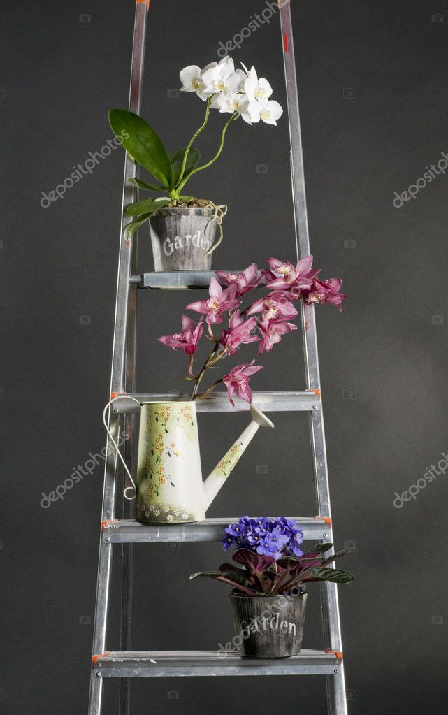 Beautiful garden flowers on metal stepladder over grey background — Stock Photo #5220150