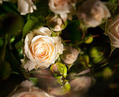 Bunch of roses - flowers and plants — Stock Photo