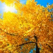 Bright autumn — Stockfoto