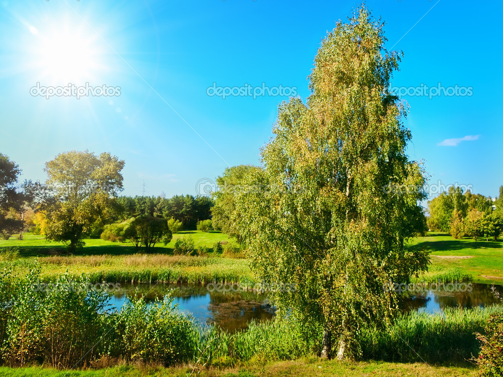 Summer scenery with green park and pond over blue sky — Stock Photo #3947795