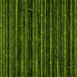 Bamboo forest — Stock Photo #4689604