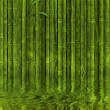 Bamboo forest - Stock Photo