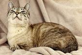 Cat over beige — Foto de Stock