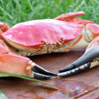 Stock Photo: Red boiled crab