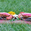 Royalty-Free Stock Photo: Red boiled crabs