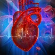 Human heart with ECG — Stock Photo #4537774