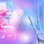 Skeletal hand — Stock Photo