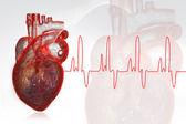 İnsan kalbi — Stok fotoğraf