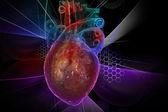 Ekg ile insan kalbi — Stok fotoğraf