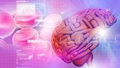 3d Brain — Stock Photo